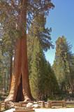 08 The Sentinel Sequoia 01.jpg