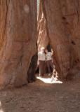 12 Between the Sequoias 01.jpg