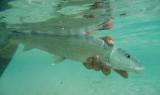 Eleuthera, Bahamas, Duck Inn, Feb 15 - Mar 8, 11th Annual Bonefish Tapout  2011