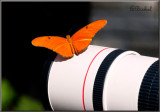 This Butterfly Prefers Canon