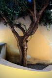 Nice/ la courbe de l'olivier