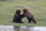 Bear 85