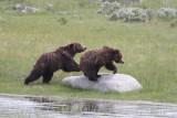 Bear 87