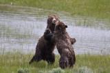 Bear 98