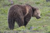 Bear 67