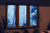 Window & Snow.