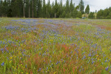 Flower Field on the Road to our Campsite