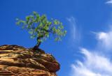 Hoodoo Tree and Cirrus I