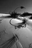 White Sands Yucca and shadows BW