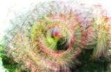 ThankYouCorinnaStoeffl - Spiral Amaryillis