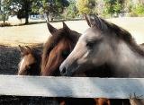 3 horses PAINT.jpg