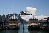 Pelican in Sydney Harbour