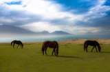 Three horses grazing in Kaikoura paddock