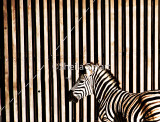 Zebra and enclosure