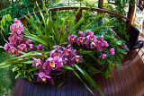 Orchids on deck with fisheye