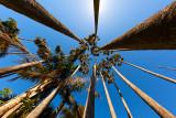 Palm trees fisheye