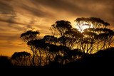 Trees at sunset in Blue Mountains