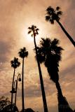 Palms in silhouette at Milsons Point