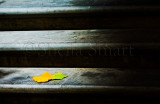 Maple leaf on steps
