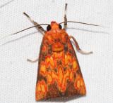 Melese flavimaculata