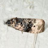 2860 - Pink-washed Leafroller - Hedya separatana