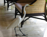 Great Egret - Ardea alba (in the lobby)