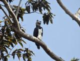 Guyana Birds