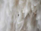 White-collared Swift - Streptoprocne zonaris