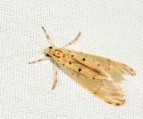 Caddisfly 1403