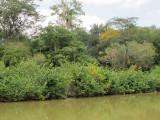 Rewa River