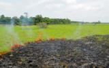 Fire in Savannah near Nappi