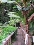 Mapaima Eco Lodge walkway between rooms