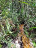 Stream in Kaieteur Falls