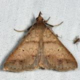 8381 - Discolored Renia - Renia discoloralis