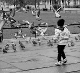 Child and Pigeons