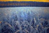 Blue Corn 01618.jpg