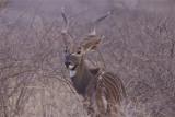 Ethiopia: mammals