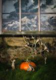 Escaped-pumpkin.jpg