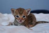 3 weeks old