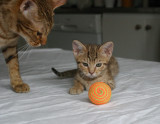 Mom and I trying to hypnotize the ball...