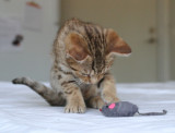 Me and my mouse