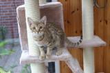 Lara 4,5 month old