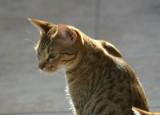 Miira 1,5 years old, sunbathing