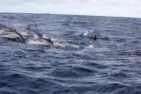 Dolphin (12).JPG