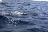 Dolphin (13).JPG