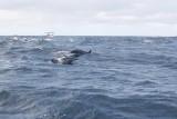Dolphin (16).JPG