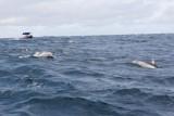 Dolphin (17).JPG