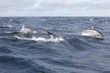 Dolphin (19).JPG