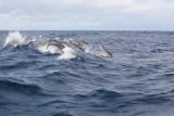 Dolphin (20).JPG