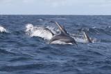 Dolphin (22).JPG